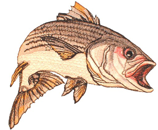 Amazing Striped Bass Embroidery Design